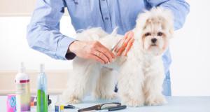 Jak otworzyć salon strzyżenia psów?